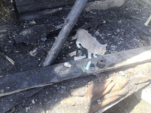 Кошка спасла спящую семью при ночном пожаре в Еврейской автономии