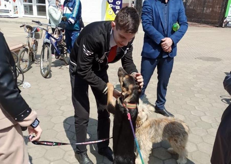 В Биробиджане завтра снова пройдёт ярмарка бездомных животных